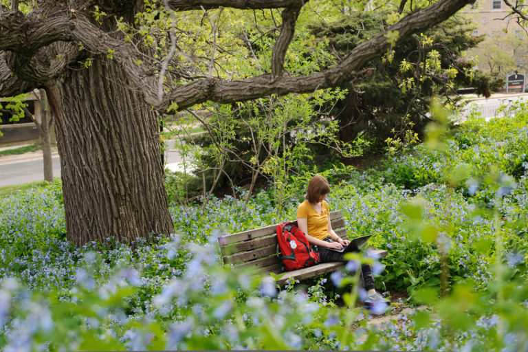 Undergraduate Sydney Rearick works on her laptop computer, surrounded by a sea of flowering bluebells, while studying under a historic bur oak tree near Nancy Nicholas Hall at the University of Wisconsin on May 13, 2013. A major in human development and family studies, Rearick was finishing writing a paper for a class on family stress and coping during final-exams week of spring semester.